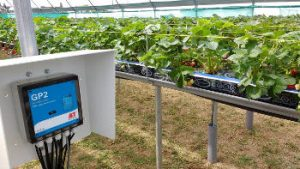 Sensor system in a strawberry greenhouse