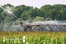 Farm irrigation system spraying water on a field of wheat